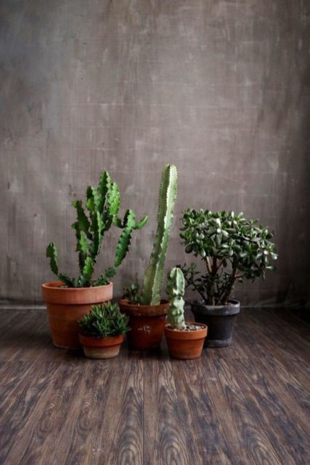 Cheap Succulent Plants Decor Ideas You Will Love03