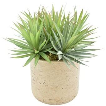 Cheap Succulent Plants Decor Ideas You Will Love05
