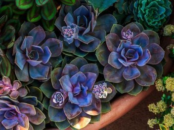 Cheap Succulent Plants Decor Ideas You Will Love07