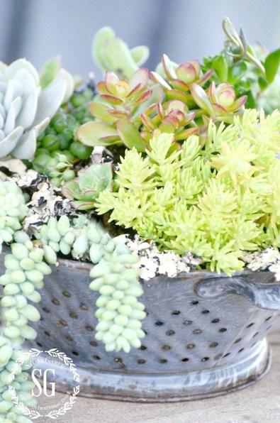 Cheap Succulent Plants Decor Ideas You Will Love10