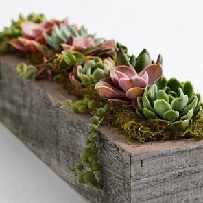 Cheap Succulent Plants Decor Ideas You Will Love12