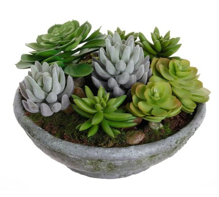 Cheap Succulent Plants Decor Ideas You Will Love22