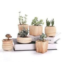 Cheap Succulent Plants Decor Ideas You Will Love25
