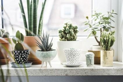 Cheap Succulent Plants Decor Ideas You Will Love32