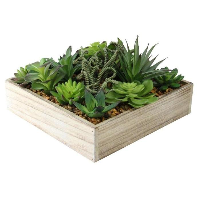 Cheap Succulent Plants Decor Ideas You Will Love33