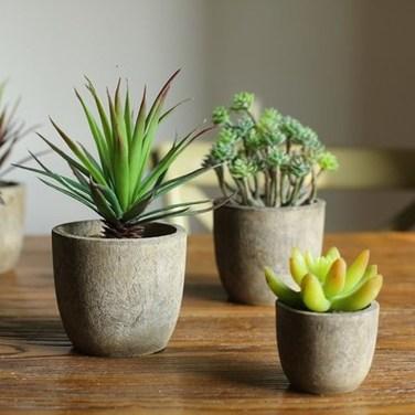 Cheap Succulent Plants Decor Ideas You Will Love39