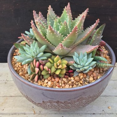 Cheap Succulent Plants Decor Ideas You Will Love46