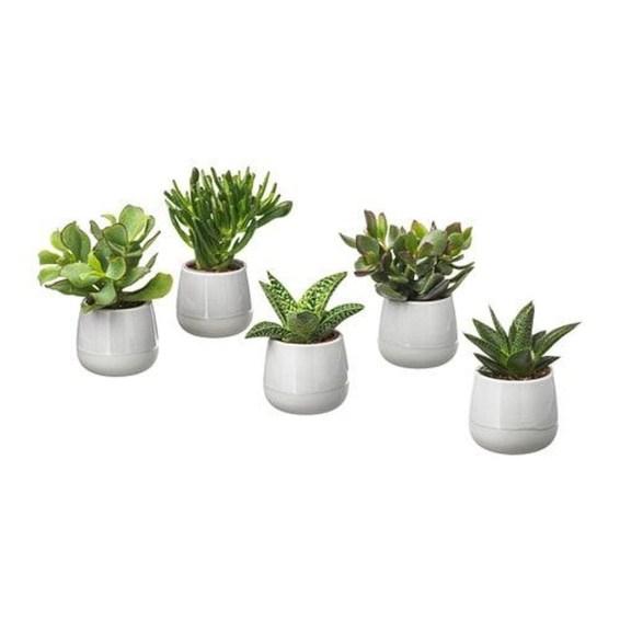 Cheap Succulent Plants Decor Ideas You Will Love48