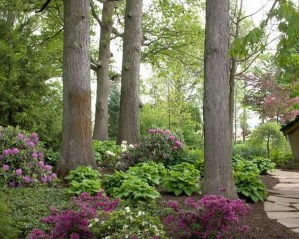 Amazing Big Tree Landscaping Ideas05
