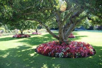 Amazing Big Tree Landscaping Ideas15