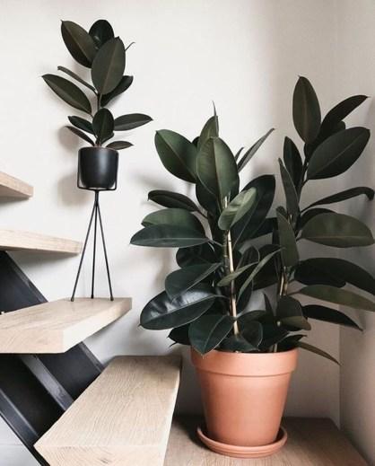 Inspiring Garden Indoor Decoration10