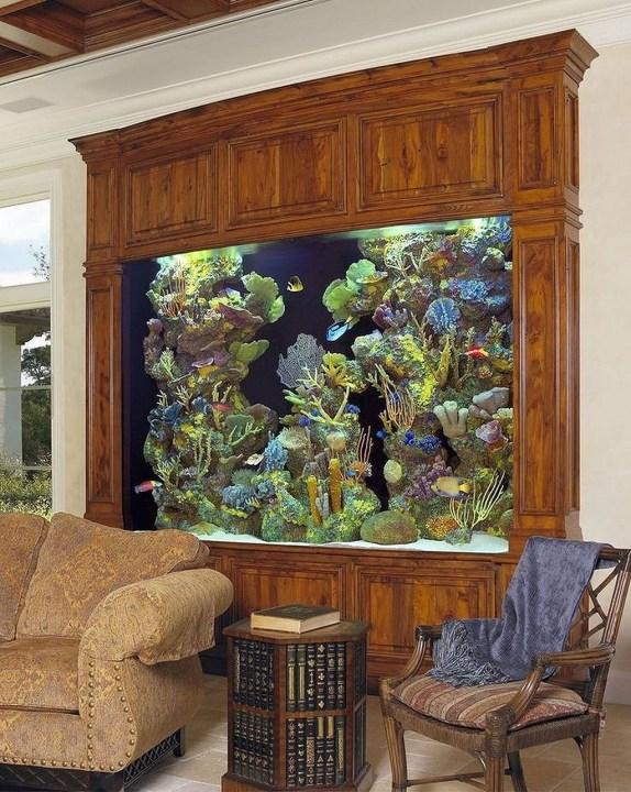 Awesome Aquarium Partition Ideas08
