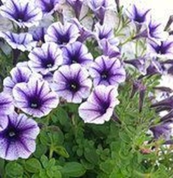 Best Plant For Your Garden On Summer01