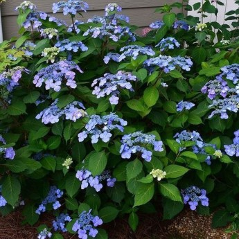 Best Plant For Your Garden On Summer21