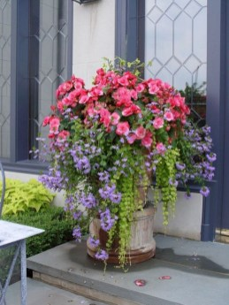 Best Plant For Your Garden On Summer22