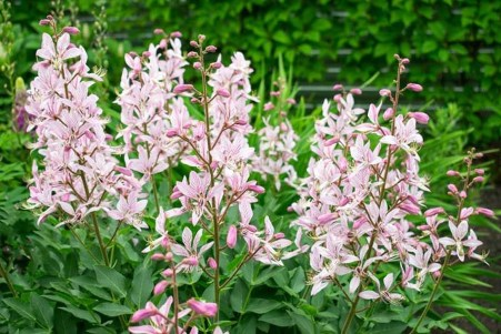 Best Plant For Your Garden On Summer26