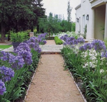 Best Plant For Your Garden On Summer38