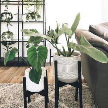 Lovely Display Indoor Plants06