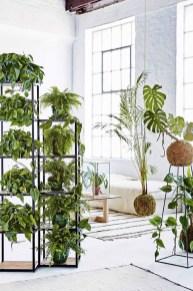 Lovely Display Indoor Plants13