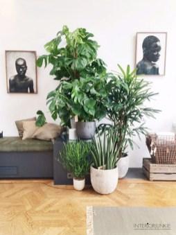 Lovely Display Indoor Plants18
