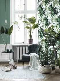 Lovely Display Indoor Plants19