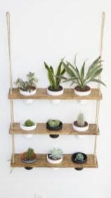 Lovely Display Indoor Plants22