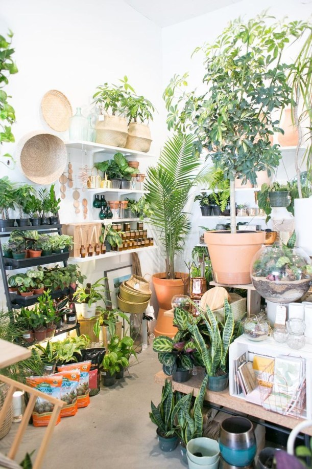 Lovely Display Indoor Plants28