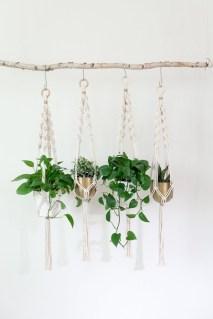 Lovely Display Indoor Plants31