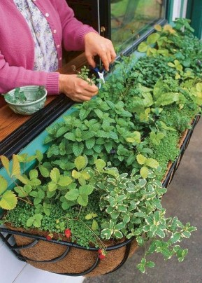 Simple Indoor Herb Garden Ideas For More Healthy Home Air17