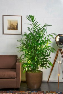 Awesome Indoor Plant Decoration Ideas To Make Natural Comfort In Your Home14