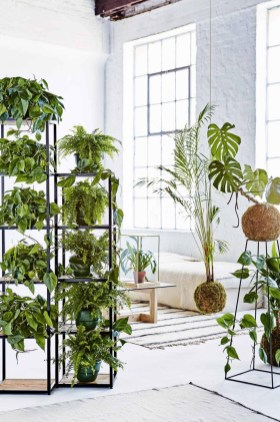 Awesome Indoor Plant Decoration Ideas To Make Natural Comfort In Your Home27