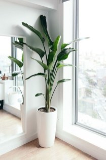 Awesome Indoor Plant Decoration Ideas To Make Natural Comfort In Your Home29