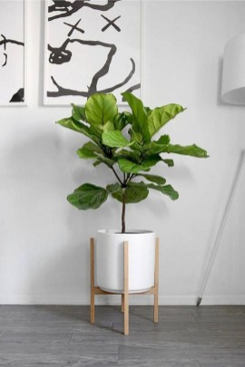 Awesome Indoor Plant Decoration Ideas To Make Natural Comfort In Your Home34