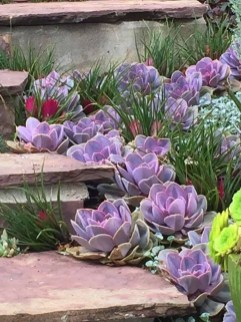 Gorgeous Succulent Garden Ideas For Your Backyard03