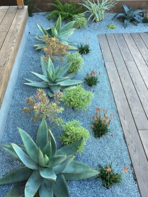 Gorgeous Succulent Garden Ideas For Your Backyard09