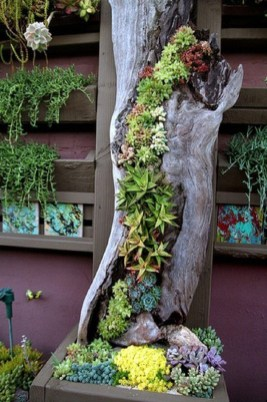 Gorgeous Succulent Garden Ideas For Your Backyard16