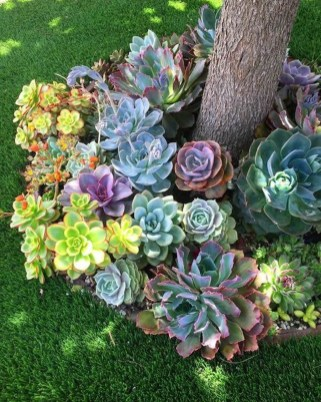 Gorgeous Succulent Garden Ideas For Your Backyard17