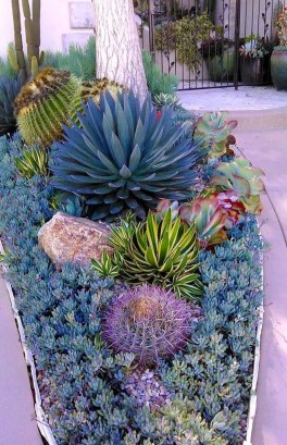 Gorgeous Succulent Garden Ideas For Your Backyard22