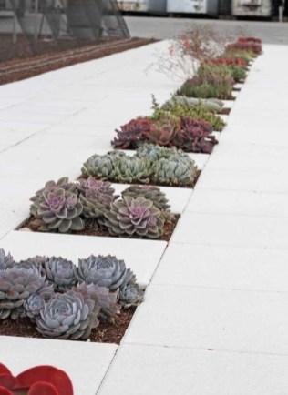 Gorgeous Succulent Garden Ideas For Your Backyard42