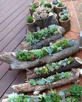 Gorgeous Succulent Garden Ideas For Your Backyard48