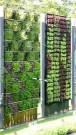 Succulents Living Walls Vertical Gardens Ideas21