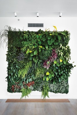 Succulents Living Walls Vertical Gardens Ideas26