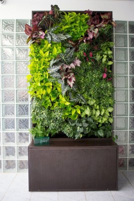 Succulents Living Walls Vertical Gardens Ideas35