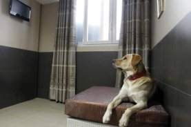 Actuel-Dogs-Parisian-Luxury-Pets-Hotel-4