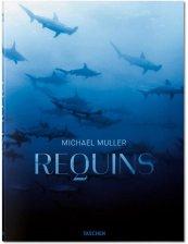 Requins de Michael Muller