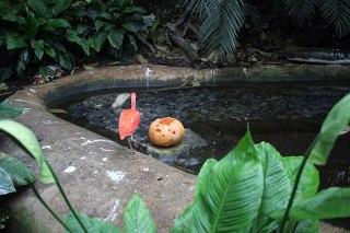 Zoo de Vincennes 18