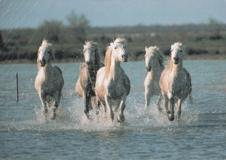 Konji-horde_0003