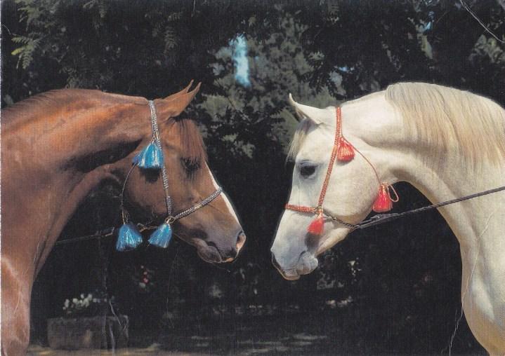 Konji-pari_0001