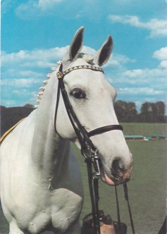 Konji_0008