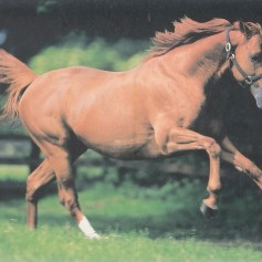 Konji_0013